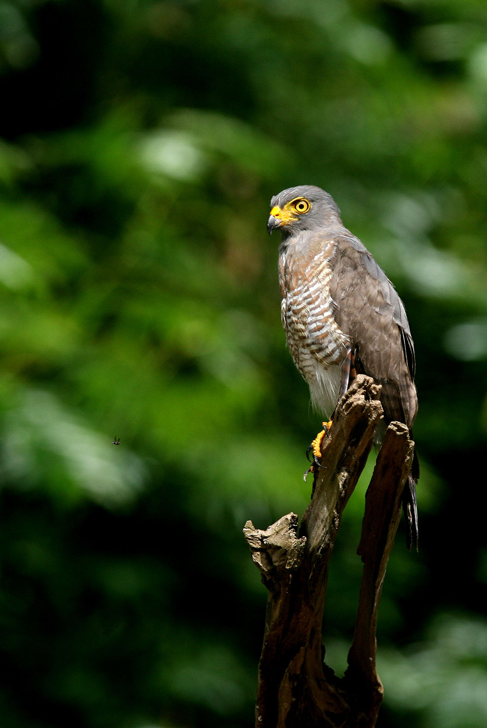Photos of the bird watching program of the Inkaterra hotel.