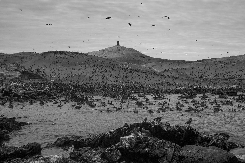 Lobos de Afuera Island. Photographs for Pro Delphinus NGO.